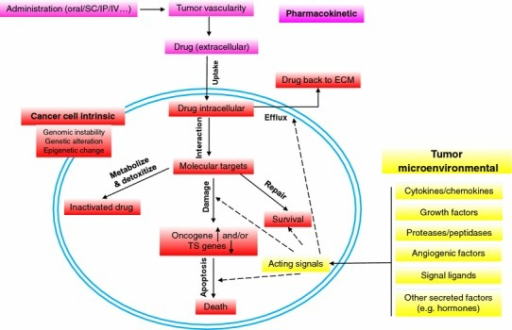 Schematic paradigm of resistance mechanisms in cancer treatment. Mechanisms underlying cancer therapy failure and treatment resistance are summarized. Factors implicated in either pharmacokinetic, cancer cell specific, or tumor microenvironmental categories have functional roles in treatment-induced responses. Changes in intracellular active drug concentrations, drug-target interactions, target-mediated cell damage, damage-induced cell death machineries or the signals from extracellular environments are actively at play under in vivo conditions. In contrast to other factors, the tumor microenvironment contains diverse stromal cell types (fibroblasts, smooth muscle cells, immune cells, endothelial cells, neuroendocrine cells, adipocytes, and pericytes) and comprises a large body of cytokines, chemokines, growth factors, proteinases, and hormones, most of which are signaling ligands, can impact pathophysiological responses to anticancer agents. Thus, the central determinants of therapeutic outcome may be highly dependent upon paracrine survival or stress signals. It is well documented that gene function and relevance varies remarkably when compared in vivo and in vitro, and studying the effect of defined genetic alterations on therapeutic response in either native or damaged tumor microenvironment is critical for effective drug development, personalized anticancer regimes, and optimal design of combination therapies. Colored text boxes: pink, pathways of drug actions; red, processes occurring in cancer cells during disease progression; yellow, signals generated by the tumor microenvironment. SC, subcutaneous injection; IP, intraperitoneal injection; IV, intravenous injection; ECM, extracellular matrix; TS, tumor suppressor
