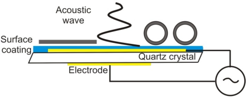 Schematics of the quartz crystal microbalance. An alternating electric field applied across a piezoelectric quartz crystal yields a resonant shear acoustic wave in the sensor crystal. The shear oscillation couples to the adsorbed film on top and shifts the resonant frequency and energy dissipation in response to the added mass and viscoelastic load.