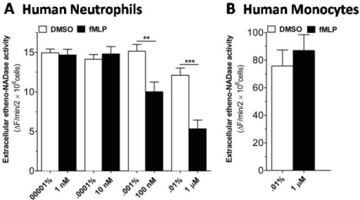 fMLP induces a decrease in extracellular etheno-NAD cleaving activity of human neutrophils, but not of human monocytes. (A) Human neutrophils and (B) human monocytes were suspended in HBSS and seeded to 96 well-plate at a cell density of 1×107 cells/ml and incubated in the CO2 humidified chamber for 10 min. Then vehicle or fMLP of different concentration was treated. Substrate etheno-NAD (final concentration 20 µM) was added following 5 min pre-read. Cleavage of etheno-NAD was continuously followed at 37℃ for 15 min. Activity was defined as the fluorescence change (▴F)/min/2×106 cells. **p<0.001; ***p<0.0001.