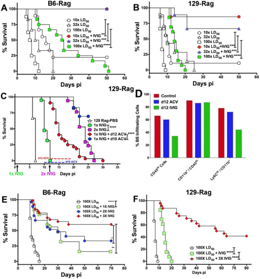 IVIG protection of Rag mice is HSV1 dose dependent.(A) B6-Rag or (B) 129-Rag mice infected with HSV1 at 10x, 32x or 100x LD50 were treated with either PBS or 4 mg IVIG at 24 h pi and monitored for survival (n = 12–28 mice / treatment group). (C) 129-Rag mice infected with HSV1 at 100x LD50 were treated with PBS or IVIG (1x) at 24 h pi and given either a second dose of IVIG at day 12 pi (2x), or a 7-day course of ACV treatment beginning day 10 pi (blue line) or day 12 pi (red line); (2–4 experiments, n = 12–32 mice / group). (D) Mononuclear cells isolated from pooled BS of 4 mice treated with 1x IVIG (control) at day 12 pi, 1x IVIG + d12 ACV (d12 ACV) or 2x IVIG (d12 IVIG) at day 15 pi were analyzed for infiltrating cell subsets by flow cytometry. (E) HD infected B6-Rag or (F) 129-Rag mice were treated with IVIG at 24 h pi. After the first dose, some mice received 1 (1x), 2 (2x) or 3 (3x) additional doses of IVIG given every 12 days (n = 20–65 mice / group). (*p<0.05 **p<0.01, ***p<0.001, ****p<0.0001).