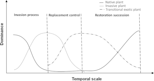 Schematic of the replacement control model for the control of invasive S. alterniflora by exotic S. apetala.At the stage of exotic species invasion, the native plant dominance gradually declines during invasive plant colonization; after the implementation of replacement control measures, i.e., in the replacement control stage, the invasive plant dominance declines after the planting of a replacement control species. After invasive plant control, the replacement control species can no longer regenerate because of its specific growth characteristics, resulting in the gradual degeneration of the replacement control species and allowing the re-establishment of native plants.