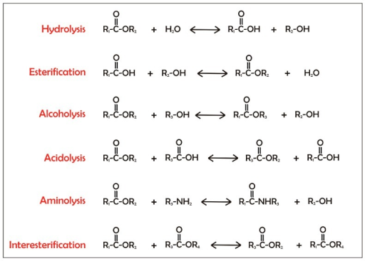Reactions catalyzed by lipases. Lipases catalyze the cleavage of carboxyl ester bonds. This reaction occurs in the presence of water as substrate or product in hydrolysis and esterification, respectively, of an alcohol in alcoholysis, of an organic acid in acidolysis, of ammonia in aminolysis, and between two different esters in interesterification.