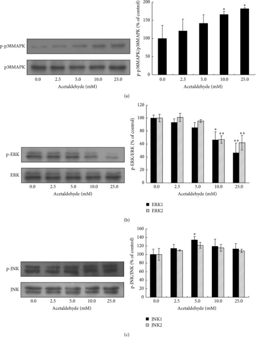 Effects of acetaldehyde on the activation of p38MAPK/ERK/JNK in SH-SY5Y cells. SH-SY5Y cells were treated with different concentrations of acetaldehyde for 24 h. Total cell lysates were collected and the protein levels of p38MAPK, phosho-p38MAPK (Thr180/Tyr182) (a), ERK (p44/p42) MAPK and phospho-ERK (Thr202/Tyr204) (b), and JNK and phospho-JNK (Thr183/Tyr185) (c) were determined by Western blot analyses. The intensities of the bands were quantified by densitometric analyses and normalized by the amount of p38MAPK, JNK, or ERK. Values are means ± SD from three independent experiments. ∗, significantly different from control (P < 0.05); ∗∗, significantly different from control (P < 0.01).