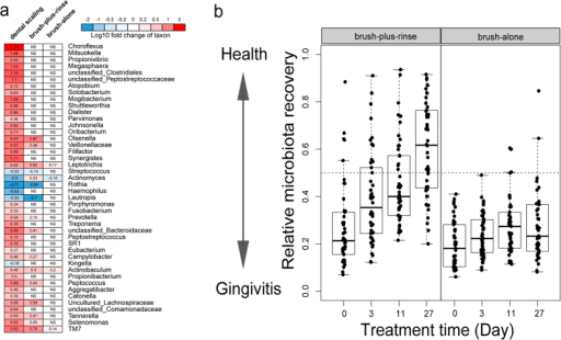 "Microbial signature of different anti-gingivitis treatments and evaluation of the relative microbiota recovery for the two treatment groups.(a) The heat map showed the enrichment of each bacterial genus from the disease state to the health state during the various treatments. During dental scaling, 44 bacterial genera significantly changed, representing the most extensive microbiota change among the three treatments. Therefore, the change pattern of dental scaling is used as a reference to evaluate the other two treatments. In certain cells, ""NS"" is displayed, which indicates the change (before and after a certain treatment) of those particular genera was ""Not Significant"". (b) Use of plaque-microbiota-based model of dental scaling to stratify subjects in the brush-plus-rinse group and the brush-alone group at four consecutive time points. Boxes denote the IQR between the first and third quartiles, and the line within denotes the median; whiskers denote the lowest and highest values within 1.5 times the IQR."