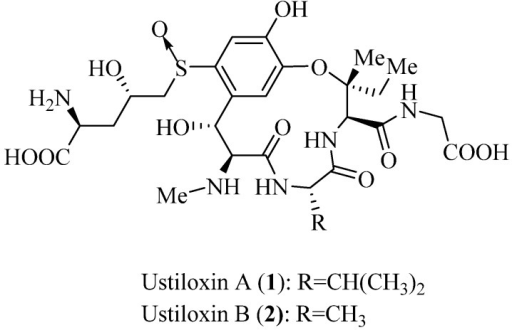 Structures of ustiloxins A and B.