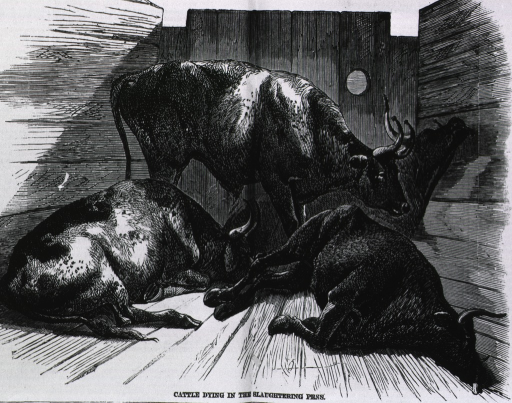 <p>Cattle dying in the slaughterhouse yards, during the cattle plague.</p>