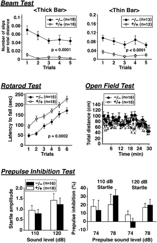 Behavioral abnormalities in claudin-19–deficient mice. All behavioral tests were performed with male Cld19+/+ and Cld19−/− mice that were ∼10–13–wk old at the start of the testing. Details of each test were described in Materials and methods. In the beam test, both on thick and thin bars, Cld19−/− mice exhibited significantly more frequent slips than Cld19+/+ mice (P < 0.0001). In the rotarod test, Cld19−/− mice dropped from the rotating rod more quickly than Cld19+/+ mice (P = 0.0002). In these tests, especially in the rotarod test, the performance of both Cld19+/+ and Cld19−/− mice improved as the trials were repeated, suggesting that the neuronal deficits of Cld19−/− mice observed in these tests were not attributed to the defects in the CNS but to those in the PNS. Consistent with this, in the open field test, the total distance traveled during 30 min was not significantly different between Cld19+/+ and Cld19−/− mice. Vertical activity and time spent in the center or the beam-break count for stereotyped behavior were not affected by the claudin-19 deficiency (not depicted). Finally, the prepulse inhibition test was performed to examine the extent to which the startle response of mice to the stimulus sound (110 or 120 dB) was inhibited by the prepulse stimulus sound (74 or 78 dB). The startle amplitude itself was not different between Cld19+/+ and Cld19−/− mice, and the inhibition by prepulse stimuli was not significantly affected in Cld19−/− mice. The data obtained from the open field test and prepulse inhibition test again suggested that Cld19−/− mice suffered from a kind of peripheral neuropathy.