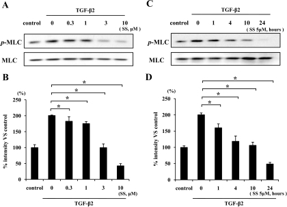 Inhibitory effect of simvastatin on TGF-β2–dependent MLC phosphorylation. Hyalocytes were starved in Dulbecco's modified Eagle's medium containing 3% calf serum for 24 h. A: Hyalocytes were pretreated for 30 min with or without the indicated concentrations of simvastatin (0.3, 1, 3, and 10 μmol/l) and subsequently treated with 3 ng/ml TGF-β2 for 24 h. Total cell lysates were subjected to Western blot analysis with an antibody against p-MLC. Lane loading differences were normalized by reblotting the membranes with an antibody against MLC. C: Hyalocytes were pretreated with or without 5 μmol/l simvastatin for the indicated time (1, 4, 10, and 24 h) and subsequently treated with 3 ng/ml TGF-β2 for 24 h. p-MLC and MLC were also examined in the same way as in Fig. 1A. B and D: Signal intensity ratios (p-MLC to MLC) were expressed as percentage of control intensity ratio. *P < 0.05 compared with TGF-β2 alone.