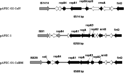 Comparison of the genetic map of the replication region of pAPEC-1 to that of pAPEC-O2-ColV (NC_007675) and pAPEC-O1-ColBM (NC_009837).Black arrows represent known ORFs genes, grey arrows represent truncated genes, and white arrows represent hypothetical protein genes and hatched arrows are Insertion Sequences genes.