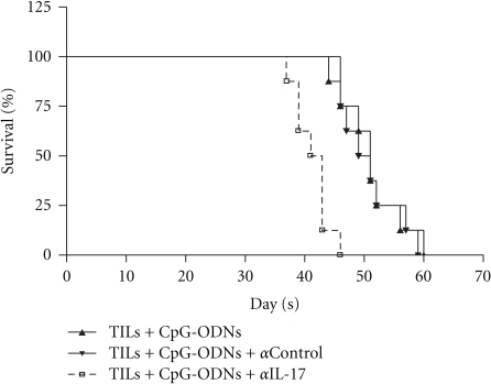 Neutralization of IL-17 reduced the survival of human lung cancer bearing nude mice. TILs were collected from lung cancer patients (n = 12) and treated with CpG-ODNs or control CpG-ODNs as described in Materials and Methods. 1 × 107 autologous TILs were transferred into the tumor bearing Balb/c nude mice with 100 ug CpG-ODNs or control CpG-ODNs through tail vein. After 2 days, the recipients were injected intravenously with anti-IL-17 (5 ug/g) every seven days. Then, the survival of tumor bearing nude mice was observed.