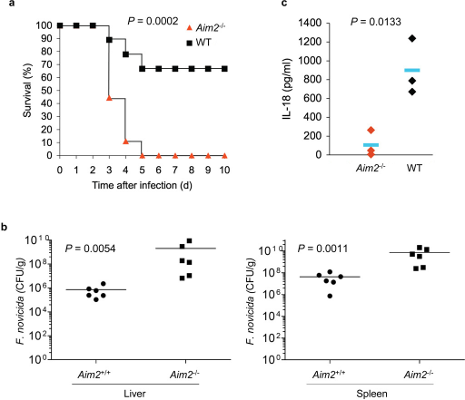 The AIM2 inflammasome is critical for innate immunity against Francisella infection. (a), Survival of Aim2+/+ and Aim2−/− mice injected subcutaneously with F. novicida (1.5 × 105 CFU) (Aim2+/+ n = 9, Aim2−/− n=9), and monitored over a period of 3 weeks. 66% of Aim2+/+ survived beyond 3 weeks post-infection. (b), Livers and spleens were harvested 48 h post-infection of mice subcutaneously with F. novicida (1.0 × 105 CFU) homogenized, and dilutions plated on Cystine Heart Agar plates for enumeration of CFU. Bacterial counts from the livers and spleens of the Aim2−/− were significantly higher compared with Aim2+/+ mice (P 0.0054, and 0.0011, respectively). (c) Enzyme-linked immunosorbent assay of IL-18 in serum from Aim2+/+ mice (n = 3) and Aim2−/− mice (n = 3) at 1 d after subcutaneous infection with F. novicida. In b,c, each symbol represents an individual mouse; small horizontal lines indicate the mean. P values, Kaplan-Meier log-rank test (a) or Student's t-test (b,c). Data are representative of two experiments.