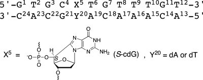 Numbering Schemeof the Mismatched Oligodeoxynucleotide Duplexes Containing the S-cdG