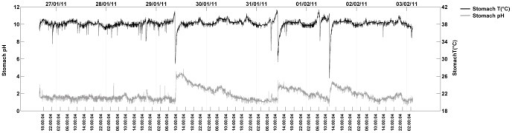 Parallel recordings of stomach temperature (upper trace, right scale) and stomach pH (lower trace, left scale) in a free-ranging wandering albatross during a seven-day foraging trip at sea.