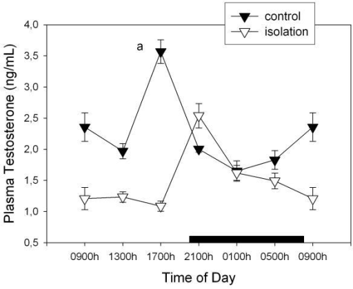 "Effect of isolation on 24-h changes of plasma testosterone concentration in young male rats. Groups of 6–8 rats were killed by decapitation at 6 different time intervals throughout a 24 h cycle. Values at 0900 point are repeated on the ""second"" day. Bar indicates scotophase duration. Shown are the means ± SEM. Letters indicate the existence of significant differences between time points within each group after a Tukey-Kramer's multiple comparisons test, as follows: a p < 0.01 vs. all time points. For further statistical analysis, see text."