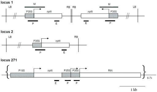 Figure 1. Schematic outline of T-DNA insertions in loc | Open-i