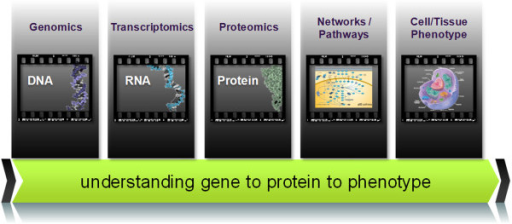 Linking cancer genotypes to cancer phenotypes. The comprehensive molecular level analysis at the DNA, RNA, protein and dynamic protein pathways and networks through proteogenomics and network modeling can greatly enhance our understanding of cancer systems biology (i.e., linking genotype to proteotype to cell/tissue phenotype).