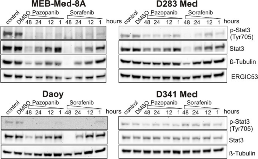 The anti-proliferative and pro-apoptotic effects of Pazopanib and Sorafenib are associated with a reduction of STAT3 phosphorylation at tyrosine 705In Daoy, MEB-Med-8A, D283 Med and D341 Med cells were treated with Pazopanib and Sorafenib at concentrations corresponding to patient's plasma levels (Pazopanib 15 μM and Sorafenib 10 μM) for a 1, 12, 24 and 48h period. Total protein levels and the phosphorylation status of STAT3 were determined by westernblot. Beta-tubulin and ERGIC53 respectively served as loading controls. The data-set shown represents 1 of 3 independent experiments.