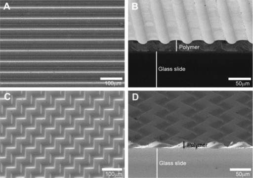 Representative SEM micrographsof micropatterned HMA-co-HDDMA thin films. (A) Atop-down view of a parallel or unidirectional micropattern with a50 μm feature spacing and 7 μm amplitude. (B) A tilted-crosssectional view of a parallel pattern demonstrating film thicknessand gradual transitions between raised and depressed features. (C,D)Top-down and tilted-cross sectional views of repeating 90° angleor multidirectional micropattern with a 7 μm amplitude.