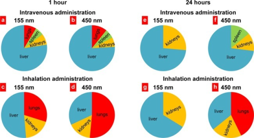 Distribution of anisotropic biodegradable polymer/lipidJanus nanoparticlesin different organs 1 and 24 h after intravenous or inhalation administrations.Mean values for eight animals are presented.