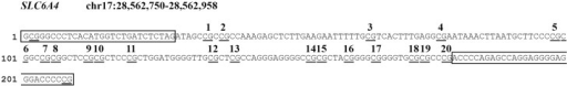 Schematic overview of the analyzed CpG sites in the SLC6A4 gene promoter region. CpG sites are underlined. PCR primer sequences are boxed. Analyzed CpG sites are indicated by numbers 1–20.