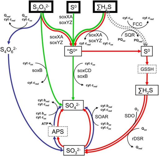 Scheme Of The Main Pathways Of Reduced Sulfur Oxidation