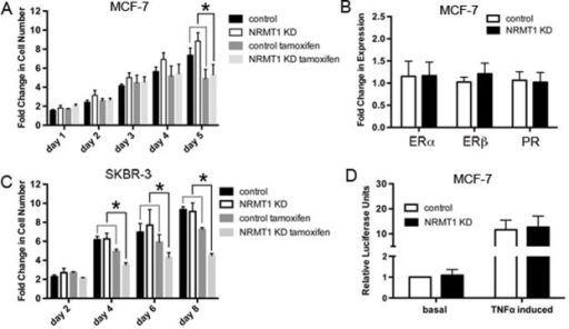 NRMT1 depletion also promotes sensitivity to tamoxifen that is independent of hormone receptor expression levels and NF-κB signaling(A) Fold change in cell number of MCF-7 NRMT1 KD and control cells with treatment of 10 μM tamoxifen or vehicle control. Each data point represents the mean ± SEM of three independent experiments. Statistical analysis was by Student's t-test and by comparing the fold change between vehicle treated groups (NRMT1 KD or control) to the corresponding tamoxifen treated groups (NRMT1 KD or control), * denotes p < 0.05. (B) RT-PCR analysis of ERα, ERβ, and PR mRNA expression levels normalized to GAPDH in five MCF-7 lines transduced with the NRMT1 KD virus as compared to corresponding control lines. Fold change in expression was calculated by setting control equal to one. (C) Fold change in cell number of SKBR-3 NRMT1 KD and control cells with treatment of 10 μM tamoxifen or vehicle control. Each data point represents the mean ± SEM of three independent experiments. Statistical analysis was by Student's t-test and by comparing the fold change between vehicle treated groups (NRMT1 KD or control) to the corresponding tamoxifen treated groups (NRMT1 KD or control), * denotes p < 0.05. (D) Luciferase assay demonstrating that neither basal nor TNFα induced NF-κB signaling is increased after NRMT1 knockdown. Each bar represents the mean ± SEM of three independent experiments.