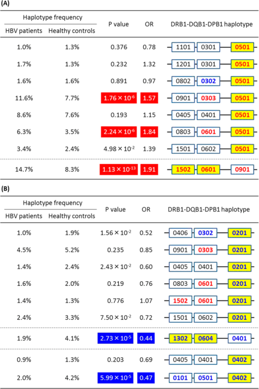 Associations of estimated haplotypes of HLA class II genes harboring.(A) DPB1 alleles susceptible to chronic hepatitis B infection, and (B) DPB1 alleles protective against chronic hepatitis B infection. Estimated haplotypes, whose frequencies were over 1% (A) in both of two groups, and (B) in either of two groups (i.e. HBV patients and healthy controls), are depicted with P values and OR. P values were calculated using Pearson's chi-square test in the presence vs. the absence of each haplotype. HLA alleles that are significantly associated with CHB infection in single point analysis are depicted in bold red (susceptible) and bold blue (protective).