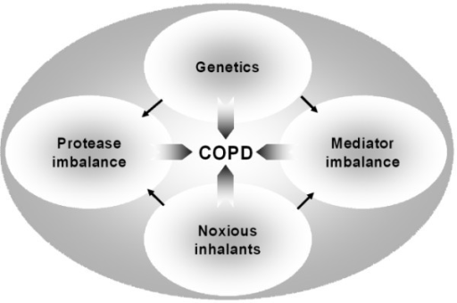 Potential pathogenetic mechanisms involved in COPD Exogenous inhaled noxious stimuli such as tobacco smoke, noxious gases or indoor air pollution and genetic factors are proposed to be the major factors related to the pathogenesis of COPD. These factors may influence protease activity and may also lead to an imbalance between pro-inflammatory and anti-inflammatory mediators.