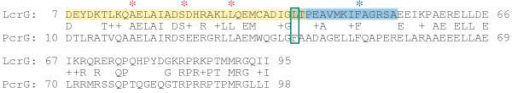 Pairwise BLAST alignment of LcrG and PcrG. Amino acid sequence alignment of LcrG from Y. pestis (NCBI RefSeq, NP_395166; ) and PcrG from P. aeruginosa (NCBI RefSeq, NP_250396; ). Overall the two proteins are 43% identical and 56% similar. The sequences were aligned using the BLAST algorithm as implemented for pairwise alignments [37]. The region highlighted in yellow (amino acids 7–40) is the smallest region identified that interacts with LcrV. The region in blue (amino acids 39–53) corresponds to a previously described deletion that eliminated secretion blocking activity [5]. The amino acids identified with red asterisks are residues identified as participating in the LcrG-LcrV interaction (A16, S23, and L30). The residue marked with the blue asterisk (F48) is required for secretion blocking activity of LcrG.