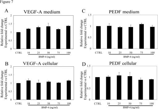 Effect of rhBMP-4 treatment on secretion of VEGF-A and PEDF from nonpolarized RPE cells. Secretion of VEGF-A (A)                                        and PEDF (C) are presented along with the corresponding cellular                                        VEGF-A (B) and cellular PEDF (D) from three different donors.                                        Data are presented as fold difference as compared to untreated controls. The cellular                                        concentrations of VEGF-A and PEDF did not differ from untreated controls                                        for the entire BMP-4 concentration range.