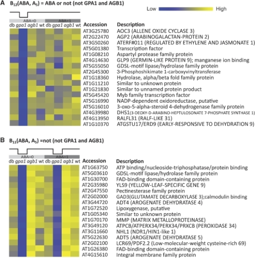 Gene expression patterns illustrating the classical II G-protein regulatory mode coupled with regulation by ABA (A), or independent of ABA (B) in guard cells. The heat map is generated with the matrix2png software (Pavlidis and Noble, 2003). The rows of each pattern correspond to genes, and the columns correspond to conditions, that is four genotypes, agb1 gpa1 double mutant (db), gpa1 mutant, agb1 mutant, wild type (wt), without or with ABA treatment. The header of each group of patterns indicates the Boolean rule and the idealized expression pattern associated with the group. The expression level for each gene is extracted from the original expression profiles by subtracting CABA (if relevant), then averaging over the three replicates and normalizing across the samples such that the mean is 0 and the s.d. is 1. TAIR (http://www.arabidopsis.org/) derived accession numbers and a brief description of the genes are shown next to the heat map.