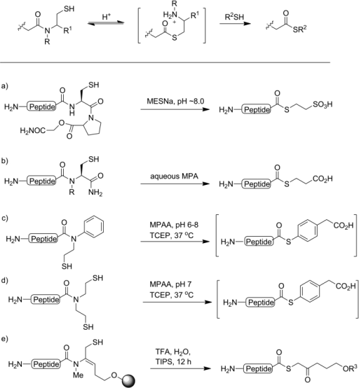 Schematic thioester formation through N→S acyl shift, and some new routes to peptide thioesters using a) the cysteinyl proline ester (CPE) method;[10] b) N-alkyl cysteine;[9h, i] c) N-sulfanylethylanilides (SEAlide);[9f, 11] d) bis(2-sulfanylethyl)amide peptides (BSEA);[9c–e] e) N-methyl enamides, R3=linker.[9g] Species depicted in square brackets are not isolated.