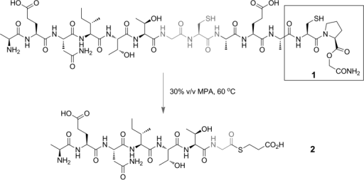 Exposure to CPE peptide 1 to 30 % v/v 3-mercaptopropionic acid at 60 °C for 48 h allowed the peptide thioester 2 to be isolated in 86 % yield.
