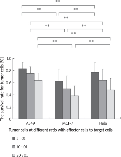 The survival rate for target cells was counted by Fluoroskan at different ratios for effector cells and target cells. The results indicated that the survival rate for tumour cells was different for different effector cells with the same ratio (**P < 0.01). In the condition of a 20 : 1 ratio of effector cells to target cells, the survival rate for tumour cells was the lowest. The survival rate for A549 was 0.64 ±0.12. The survival rate for MCF-7 cells was 0.38 ±0.17. This showed that the MCF-7 cell killing capacity of leukocytes is stronger than the killing capacity for A549 cells. Leukocytes from healthy people act differently in their effect on different tumour cells