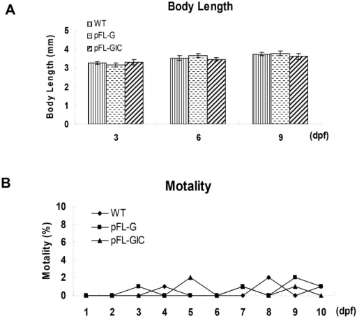 Biological impact on development in zebrafish larvae after pFL-GIC injection.A. The body length of pFL-GIC injected zebrafish larvae, compared with pFL-G injected zebrafish and WT larvae at 3-, 6- and 9-dpf (p>0.05). B. The mortality curve of zebrafish larvae after pFL-GIC injection, compared to that of pFL-G injected zebrafish and that of WT in the first 9 days during the embryonic development (p>0.05).
