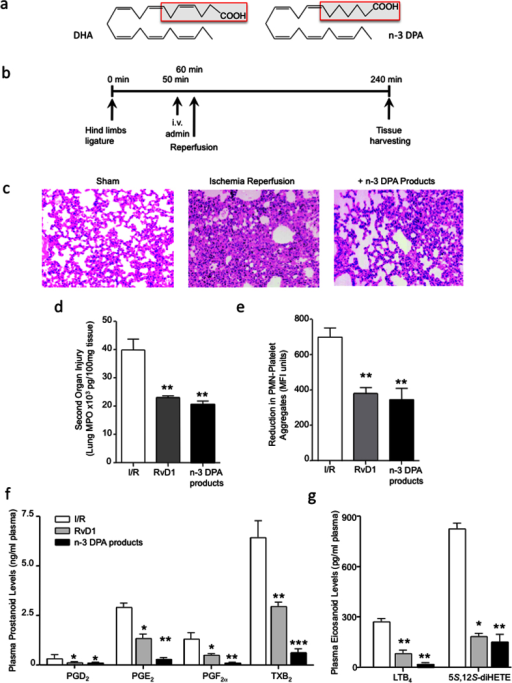 n-3 DPA-derived products display potent anti-inflammatory and tissue protective actions in vivo that are comparable to RvD1.(a) Structures of DHA and n-3 DPA. (b) Ischemia was induced by applying tourniquets to the hind limb of 6-8-week-old male FvB mice. After 1 h, tourniquets were removed and reperfusion ensued for 3 h. 10 min prior to reperfusion, vehicle (saline containing 0.1% EtOH), RvD1 (500 ng) or a mixture of n-3 DPA-derived products (see Methods for details) were administered intravenously. At the end of reperfusion, lungs were collected; (c) tissue histology by H&E staining (x200) and (d) MPO levels were assessed. (e) Blood was collected, incubated with rat anti-mouse Ly6G and rat anti-mouse CD41 antibodies and neutrophil leukocyte aggregates were assessed by flow cytometry. (f) Plasma prostanoid and (g) leukotriene levels were assessed by lipid mediator metabololipidomics. Results c are representative n = 4. Results d–e are mean ± SEM. n = 4. * P < 0.05, ** P < 0.01 vs. vehicle mice.