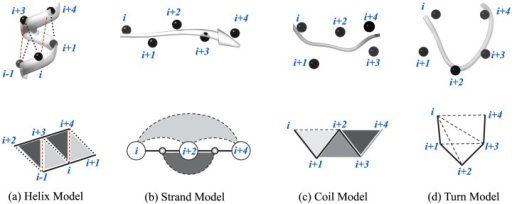 Local structural motifs used to model protein secondary structure as defined by the knob-socket model.On the top for each type of secondary structure, ribbon diagrams of the protein backbone with black spheres at Cα positions are presented. On the bottom, two-dimensional lattice representations are shown of the local residue interactions that define secondary structure, where solid lines represent covalent contacts between residues and broken lines are packing interactions. Because only the local interactions are being considered to predict secondary structure, only the socket portion of the knob-socket model is used. The knob portion signifies interactions at the level of tertiary structure or packing of non-local residues distant in the protein sequence. Each of the 4 types of secondary structure are described in more detail. (a) Helix Model: Relative residue positions and interactions are shown. Two types of sockets are represented in different grey scale:  sockets in dark grey and  sockets in light grey. (b) Strand Model: Double-side sheet sockets are shown. Sockets  and  in white are facing one direction, a socket  in dark grey faces the other side. Also, the side chain only socket  is shown in light grey. (c) Coil Model: Three types of coil sockets are shown. The socket  is closed socket with all three residues in contact one another, the socket  is open socket with  contact and  contact but no contact between  and , and the socket  is strained socket with no contact between  and . (d) Turn Model: Three residue sockets , , , and  in the 5 residue turn are shown.