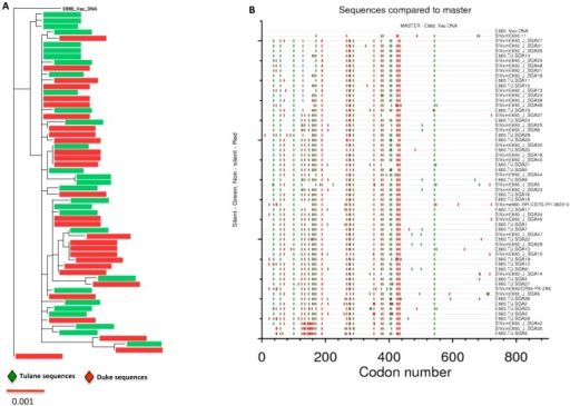 Comparison of E660 viral swarm sequences in the challenge stock to the E660 vaccine construct.The full-length E660 sequences were trimmed to match the vaccine construct sequence. (A) Neighbor-joining phylogenetic tree with all 58 env sequences compared against the vaccine construct. (B) Highlighter plot showing the silent (green) and non-silent (red) changes in all 58 trimmed envelope sequences compared to the E660-vaccine construct.