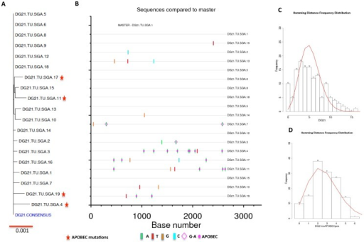 Phylogeny and Poisson-Fitter analysis of DG21 macaque env sequences.We analyzed 19 full-length envelope sequences from SIVsmE660 infected DG21 macaque. (A) phylogenetic comparison of DG21 env sequences to the generated consensus DG21 envelope sequence. (B) Highlighter plot exhibiting the nucleotide differences in DG21 env sequences compared to DG21 consensus sequence. (C) Poisson-Fitter plots of DG21 env sequences including APOBEC mutations. (D) Poisson-Fitter plots of DG21 env sequences excluding the APOBEC mutations.
