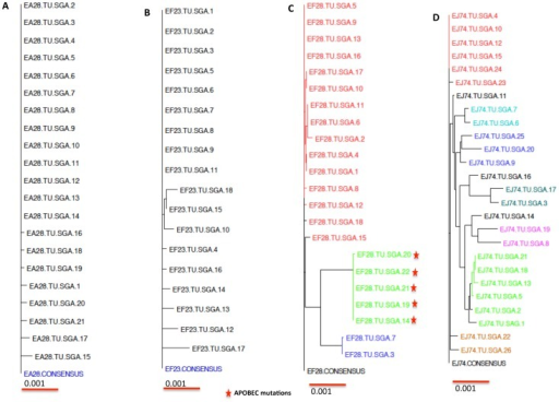 Phylogenetic analysis of full-length env sequences from Gag-Env-GM-CSF group (Group II)) macaques.All the macaques in this group were vaccinated and challenged with SIVsmE660. The full-length envelope sequences were compared to a derived consensus sequence from each animal (A) EA28 (B) EF23 (C) EF28 and (D) EJ74. Multiple lineages of T/F viruses infecting the same macaque were shown in different colors.