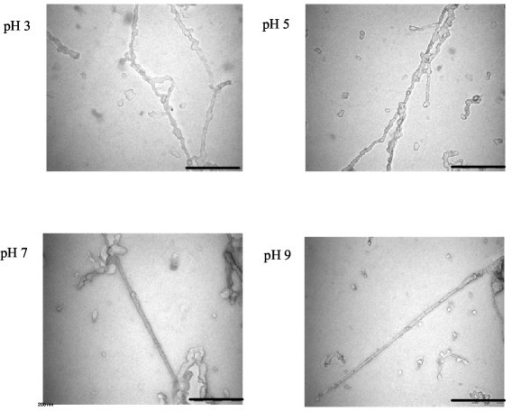 TEM images. TEM images of the replicas obtained after freeze-fixation and freeze-drying of an aqueous solution of recombinant C-domain at different pHs. (Bar = 0.2 μm).