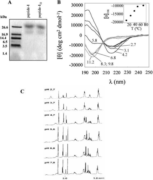 Conformational characterisation of peptide-1. (A). Tris-Tricine electrophoretic mobility of peptide-1 and peptide-122. (see Table 1 for theoretical molecular weights). Standard molecular weight markers are shown on the left. (B). far-UV CD spectra as a function of pH at 10°C. The concentration of peptide-1 was 50 μM. pH values are indicated in the spectra. The insert shows the dependence with the temperature of the molar ellipticity at 198 nm from spectra acquired at pH 6.8. (C). 1H NMR monodimensional spectra of peptide-1 (50 μM) in water at different pH values.