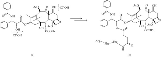 Paclitaxel (PTX). (a) At left the locations of C2′OH and C7′OH are labeled; (b) at right, the C2′OH moiety has been coupled with a glutamic acid linker and the corresponding Phe-Phe-Arg tripeptide to give C2′-PTX-FFRck.