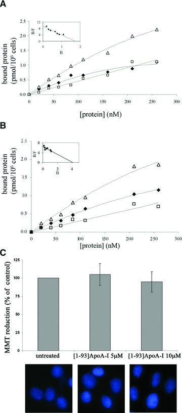 Binding of [1–93]ApoA-I to cultured cells and its effects on cell viability. Binding curves were obtained incubating H9c2 cells (A) or HepG2 cells (B) for 2 hrs at 4°C with increasing concentrations of iodinated [1–93]ApoA-I, in the absence (Δ, total binding) or in the presence (□, non-specific binding) of a 40-fold molar excess of the unlabelled polypeptide. Specific binding values (♦) were obtained by subtracting the values relative to non-specific binding from those of total binding. The linearization of specific binding curves was obtained according to the Scatchard equation (insets of A and B). B: pmoles of protein bound to 1 × 106 cells; F: concentration of the unbound protein. (C) MTT reduction assay and Hoechst staining of H9c2 cells untreated or treated with 5 μM or 10 μM [1–93]ApoA-I. Error bars indicate standard deviations obtained from four independent experiments. All images have been acquired at the same magnification.