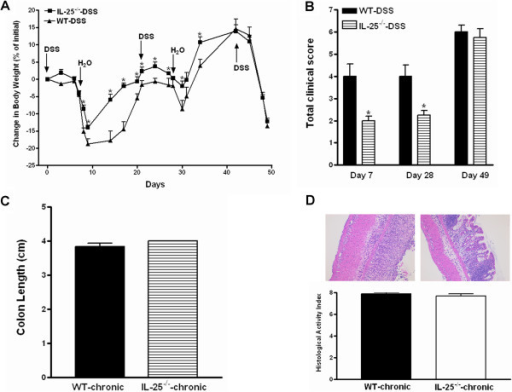 Mice genetically deficient in IL-25 are partially protected from chronic dextran sulfate sodium (DSS)-induced colitis. Mice were exposed to three cycles of DSS treatment. Each cycle of DSS involved seven days of DSS followed by 14 days on regular water. Mice were euthanized at the eighth day of the third DSS cycle. (A) Body weight change expressed as the percentage of initial body weight at day 0; (B) Clinical disease activity based on stool consistency (0–3), presence of blood in stool (0–2), and general appearance (0–2); (C) Colon length at euthanasia; (D) Representative H&E-stained colon sections (100X) and the histological activity index from a total score of epithelial damage (0–4) and inflammatory cell infiltration (0–4). Data are mean ± SEM and are representatives of two independent experiments with five or six mice per group. *P < 0.05 versus the respective WT.