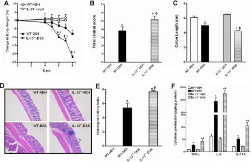 Mice genetically deficient in IL-13 are more susceptible to acute dextran sulfate sodium (DSS)-induced colitis. Mice were given 3.0% DSS in drinking water for 7 days and euthanized at day 8. (A) Body weight change expressed as the percentage of initial body weight at day 0; (B) Clinical disease activity based on stool consistency (0–3), presence of blood in stool (0–2), and general appearance (0–2); (C) Colon length at euthanasia; (D) Representative H&E-stained colon sections (100X); (E) Histological activity index from a total score of epithelial damage (0–4) and immune cell infiltration (0–4); (F) In situ cytokine production in the colon by ELISA. Data are mean ± SEM and are representatives of two independent experiments with five mice per group. *P < 0.05 versus the respective VEH; ϕ P < 0.05 versus respective WT.