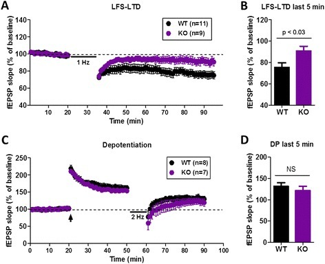 NMDA receptor-mediated long-term depression and depotentiation in wild-type and cAMP-GEF II−/− mice. a, Long-term depression (LTD) induced by low frequency stimulation (1x LFS; 1 Hz for 15 min) was impaired in cAMP-GEF II−/− (KO) mice. b, There was a significant difference in NMDA receptor-LTD between wild-type and cAMP-GEF II−/− mice during the last 5 min of recording (WT = 75.54 ± 4.27 %, 11 slices from eight mice; KO = 90.74 ± 4.5 %, 9 slices from eight mice; unpaired t-test, p < 0.03). c, Depotentiation in wild-type (WT = 131.55 ± 8.3 %, 8 slices from four mice) and cAMP-GEF II−/− mice (KO = 121.69 ± 9.7 %, 8 slices from four mice; arrow, three trains of theta-burst stimulation). d, There was no difference in depotentiation between wild-type and cAMP-GEF II−/− mice during the last 5 min of recording. Abbreviations: fEPSP, field excitatory postsynaptic potential. NS, no significance
