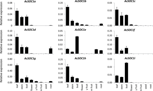 Relative expression of kiwifruit SOC1-like genes in leaf, stem, bud, flower, young fruit, mature fruit, seed, and root, normalized to kiwifruit ACTIN (ACT). Error bars represent standard errors (SE) for three replicates.