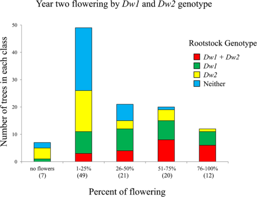 Number of trees in each flowering class and composition of classes by Dw1 and Dw2 genotype. Flowering was assessed by estimating the total number of flower clusters on each tree in the spring of year 2, and placing them into quartiles relative to the most highly floral trees, i.e., 1%–25%, 26%–50%, 51%–75% and 76%–100%. Trees with no flowers were also recorded. Data are from 109 trees from the first population, replicate 1.