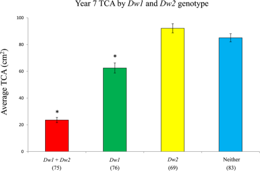 Average year 7 TCA of trees in each genotypic class. The number of individuals in each class is given in parentheses; error bars indicate standard error. Average TCAs were compared to the group with neither Dw1 nor Dw2 by ANOVA; asterisks indicate the means are significantly different with a P value of <0.001. Data are from 303 trees from the second population.